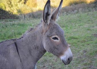 donkey-2761528_1920