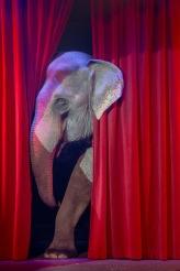 elephant-3503712_1920